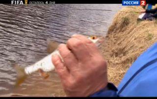видео рыбалка бесплатно онлайн поплавочную удочку